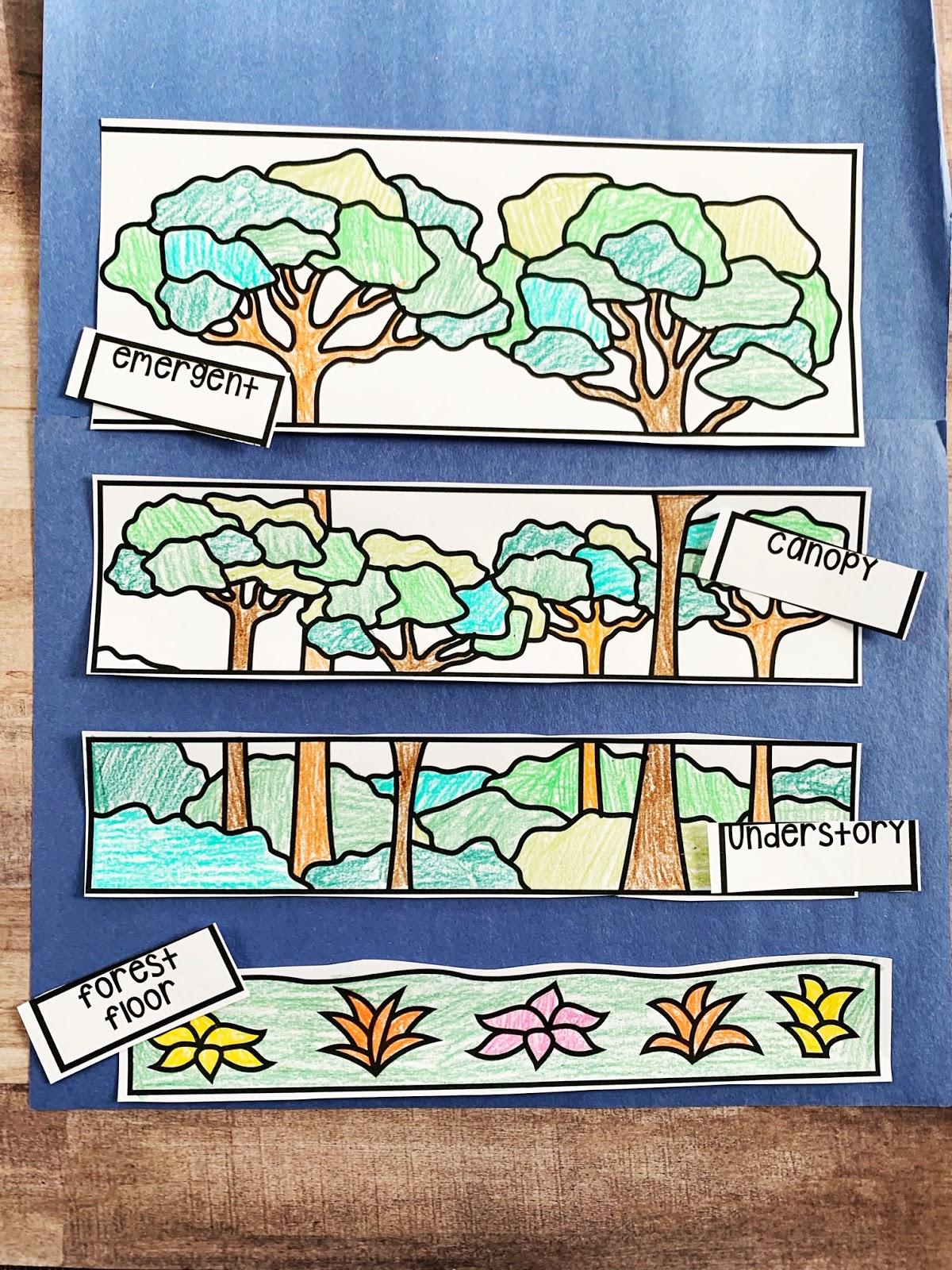 Rainforest Ela Unit For Kindergarten And 1st Grade