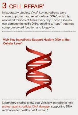 membantu memperbaiki sel