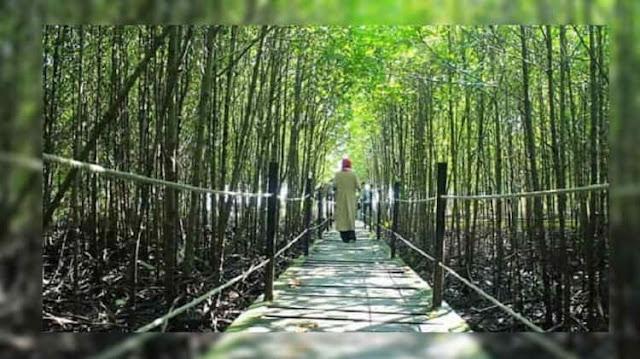 Objek Ekowisata Bandar Bakau Dumai