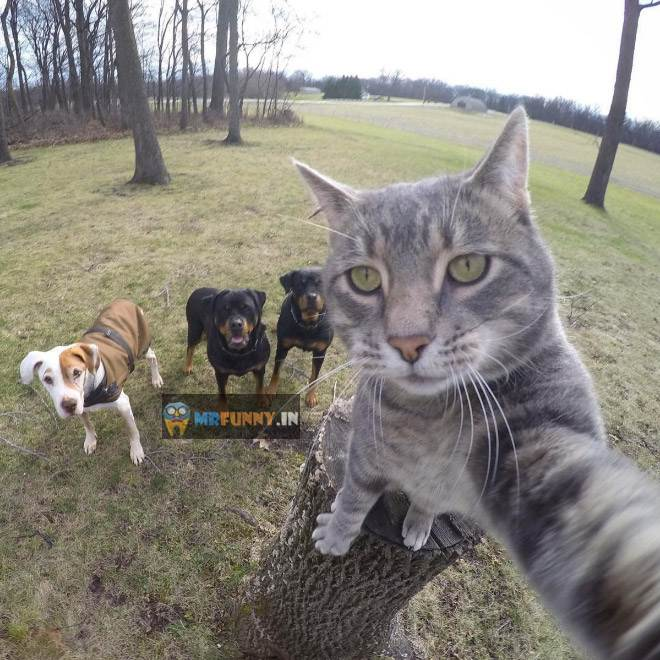 Manny The Selfie Taking Cat