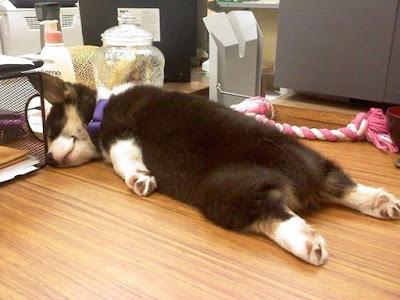 Cachorrito durmiendo sin preocupaciones