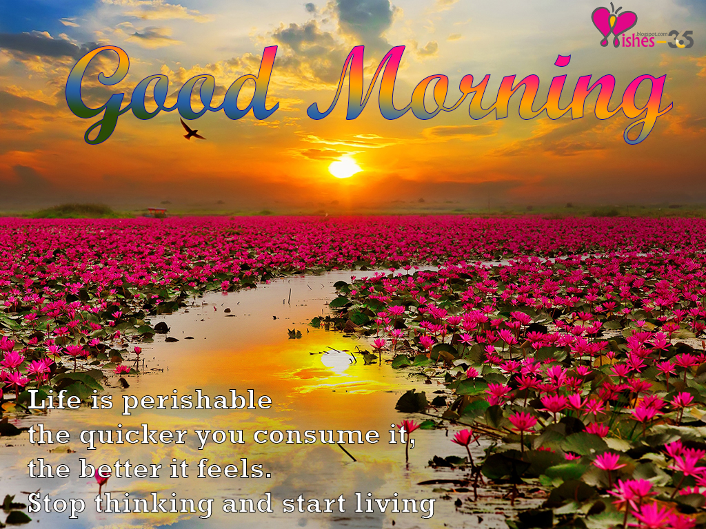 Poetry And Worldwide Wishes Good Morning Images With Quotes And Flowers