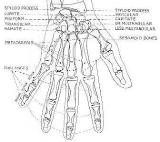 Radiographic positioning: Hand PA