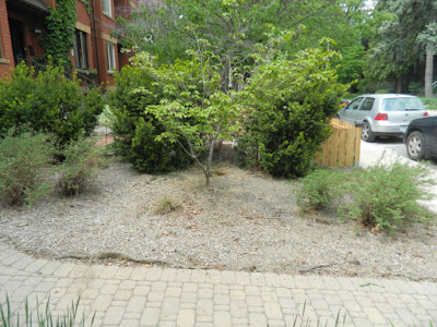 Leslieville summer garden weeding and cleanup after by Paul Jung Gardening Services Toronto
