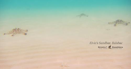Elvie Sandbar Balabac - Schadow1 Expeditions