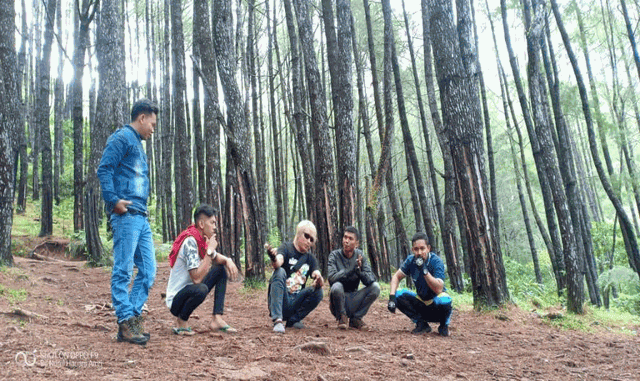 Kawasan Hutan Pinus Lajoangin