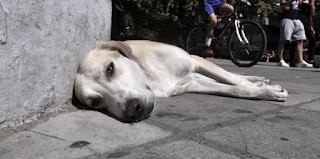 Φρίκη στο Μοσχάτο: Βρέθηκε σπίτι «κολαστήριο» με δεκάδες νεκρά ζώα