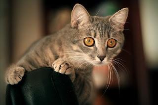 Fakta dan juga Fungsi Kumis Kucing