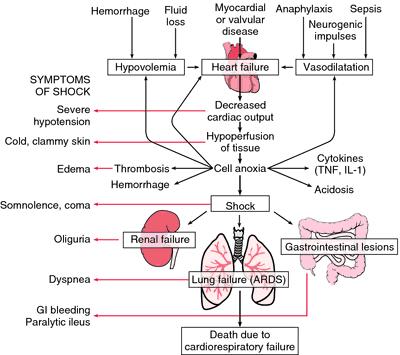 Syok Anafilaktik (Anaphylactic Shock) pada Hewan