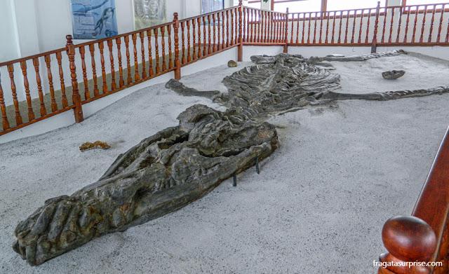 Cronossauro Boyacencis - Museu El Fóssil, Villa de Leyva, Colômbia
