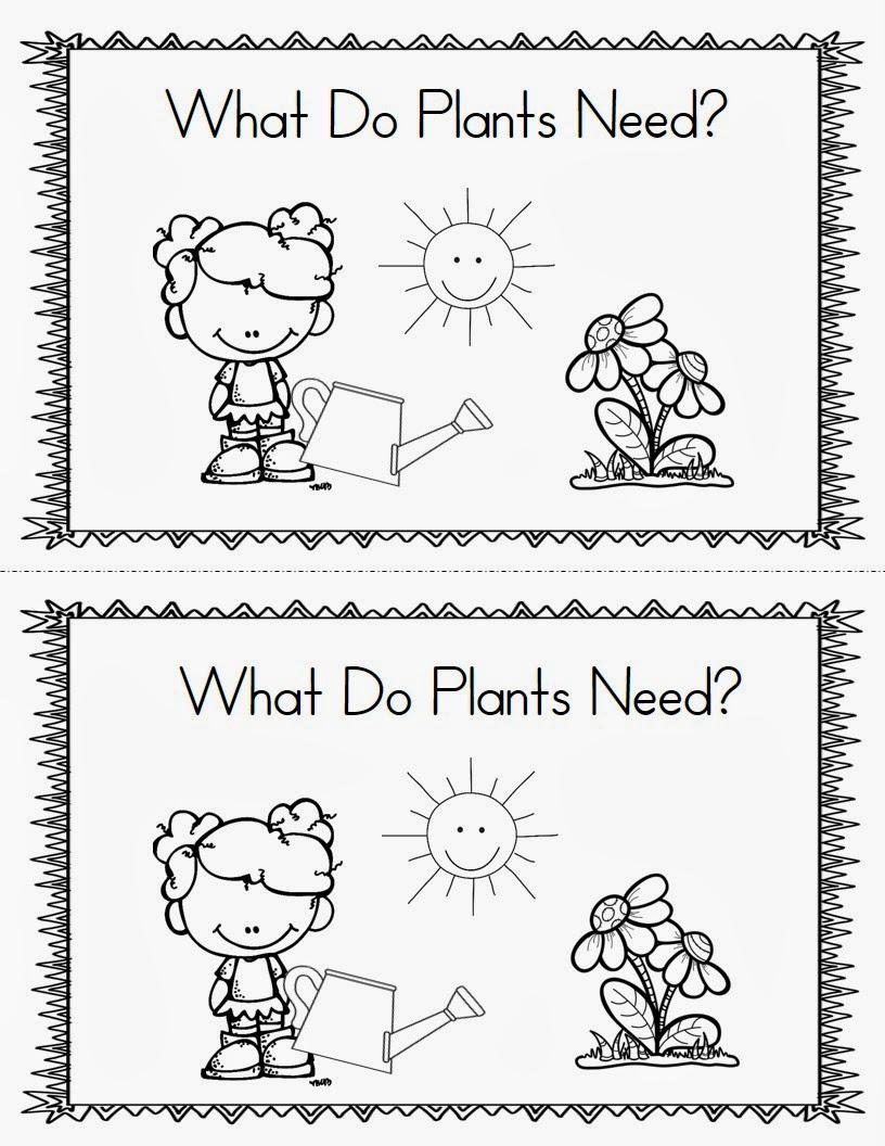 Plants Mrs Mcginnis 39 Little Zizzers