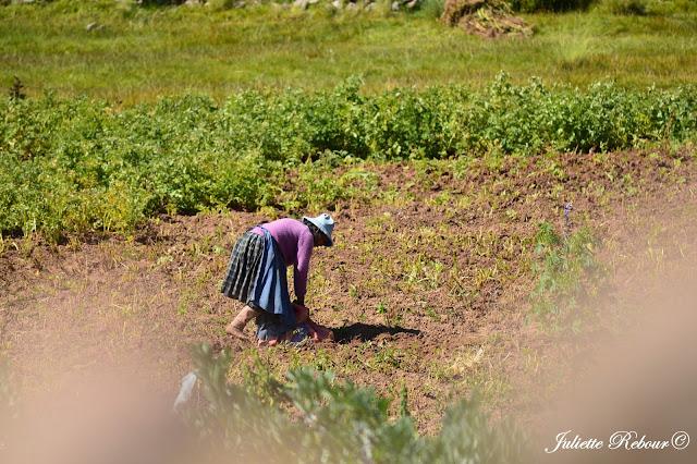 Voyage au Pérou sur le Lac Titicaca