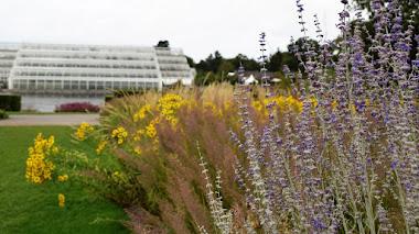 Glasshouse Borders en Wisley: 17 años y 'ríos de plantas' diseñados originalmente por Piet Oudolf