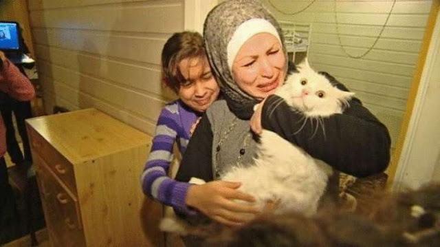 Кот преодолел полмира, чтобы вернуться в свою семью