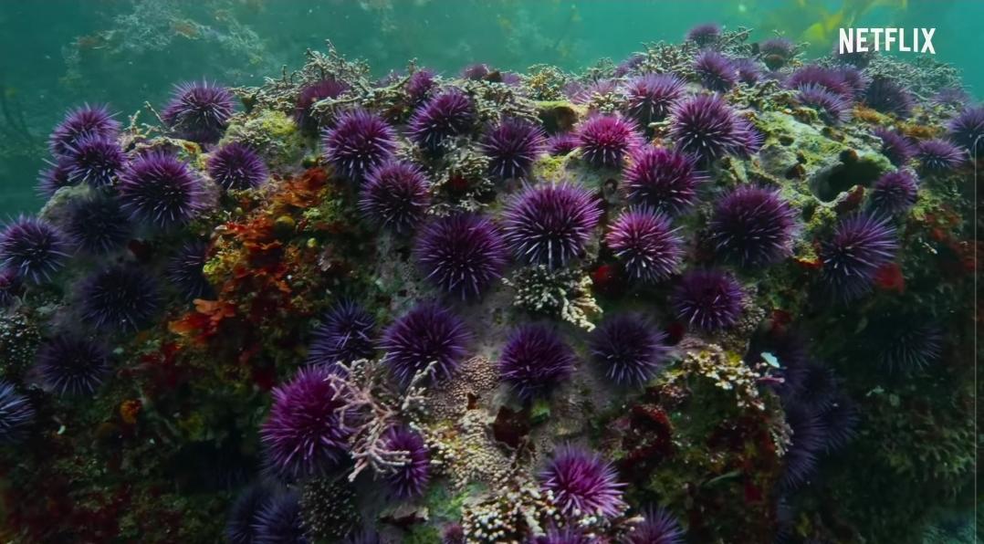 해달이 캘리포니아 켈프 숲에서 매우 중요한 존재라고 불리는 이유 | 인스티즈