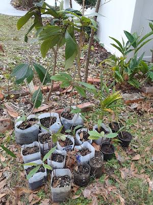 milk container planting pots