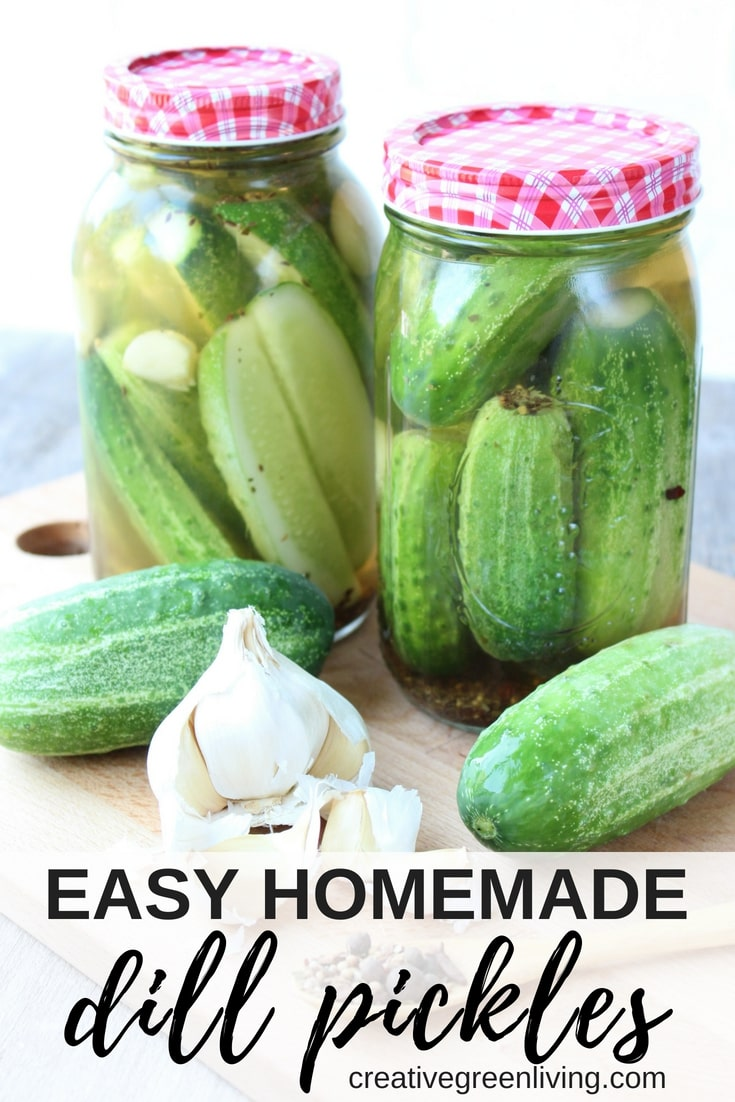 Learn how to make easy homemade dill pickles - no canning required! This crunchy pickle recipe uses kosher ingredients to make simple dill pickles that keep in your refrigerator. The combination of garlic and a traditional lacto-fermentation method creates a delightfully sour pickle that stays crispy and is quick to make. #picklerecipe #dillpickle #fermenting #lactofermentation #traditonalfoods #fermentedfoods