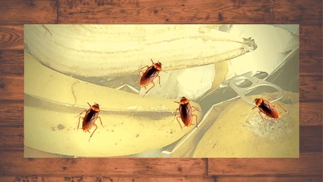 ✅Información sobre las cucarachas-baratas