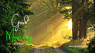Image contains beautiful sun light passing through wild trees with good morning message