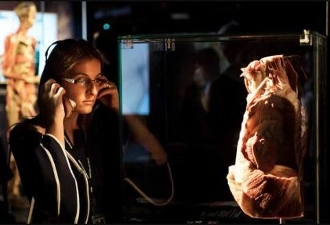 Learn about health education at London Body Worlds