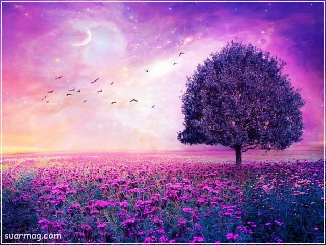 صور خلفيات - خلفيات ورد 14   Wallpapers - Flowers backgrounds 14