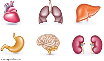 Pengertian, Bagian-Bagian, dan Fungsi Organ Pada Manusia dan Hewan