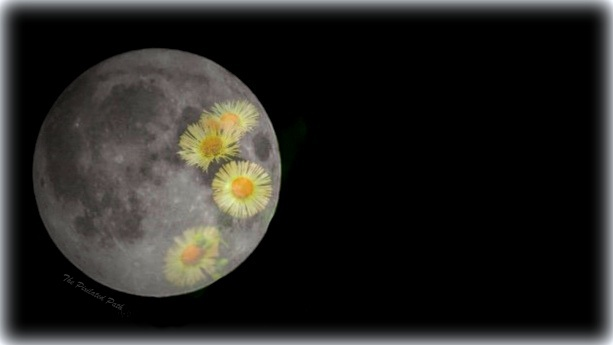 5 Simple Ideas for Celebrating the May Full Moon