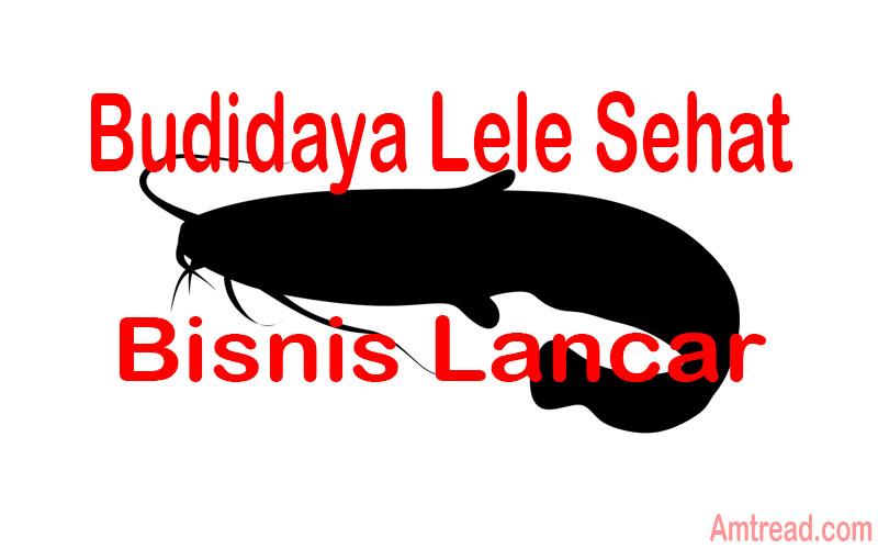 Teknik Bisnis Budidaya Ikan Lele