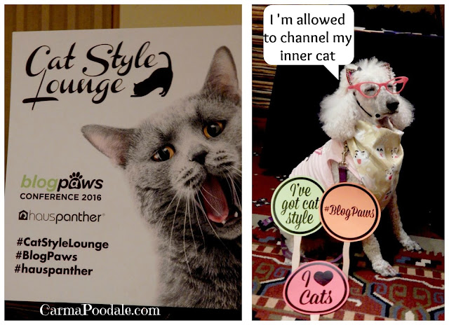 #CatStyleLounge #Blogpaws Carma dressed as a cat