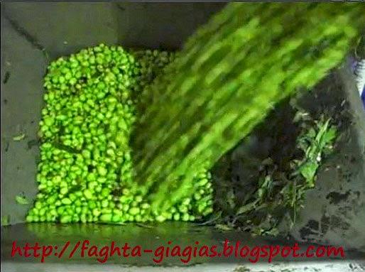 Ελαιόλαδο ή λάδι ελιάς - πως παράγεται - κατηγορίες και χαρακτηριστικά  - Τα φαγητά της γιαγιάς