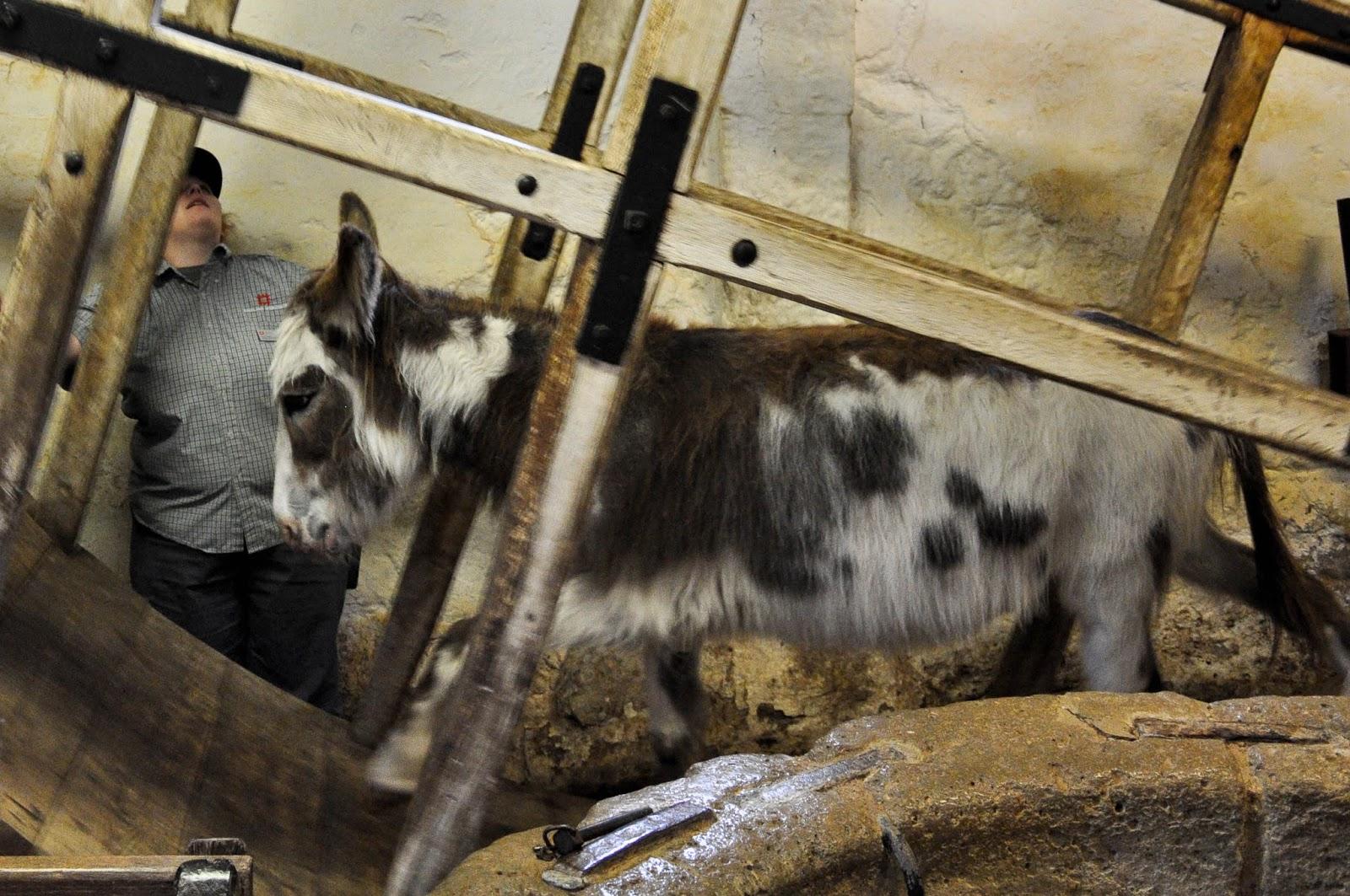 The donkey at work, Carisbrook Castle, Isle of Wight, UK