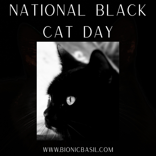 National Black Cat Day Banner ©BionicBasil® Parsley