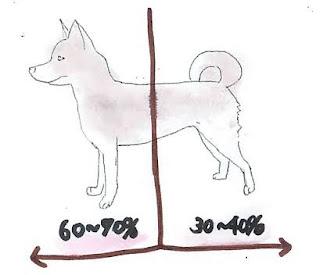 centro de gravidade de cães
