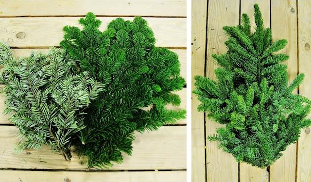 Fragrant Christmas greens Fir