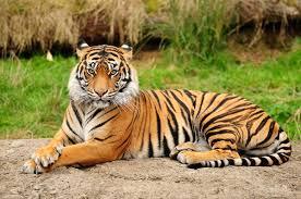 صور حيوانات أليفة