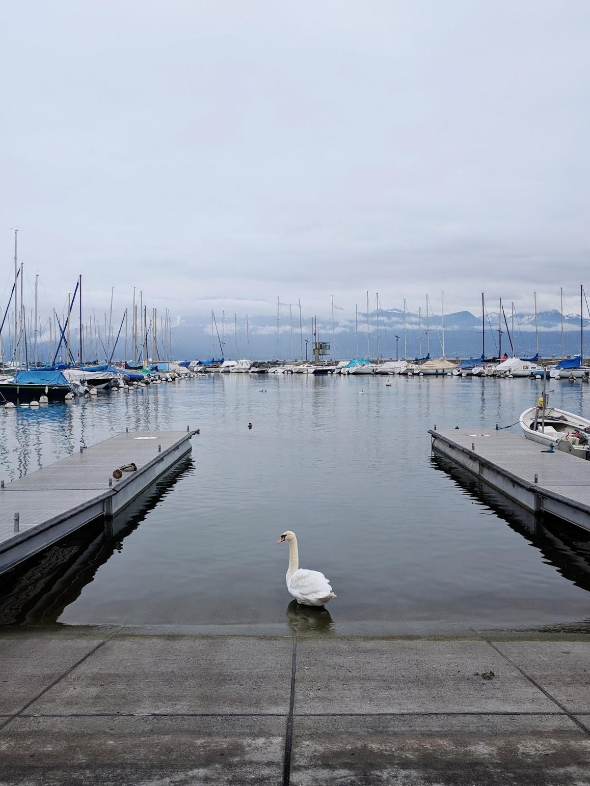 lake geneva white swan
