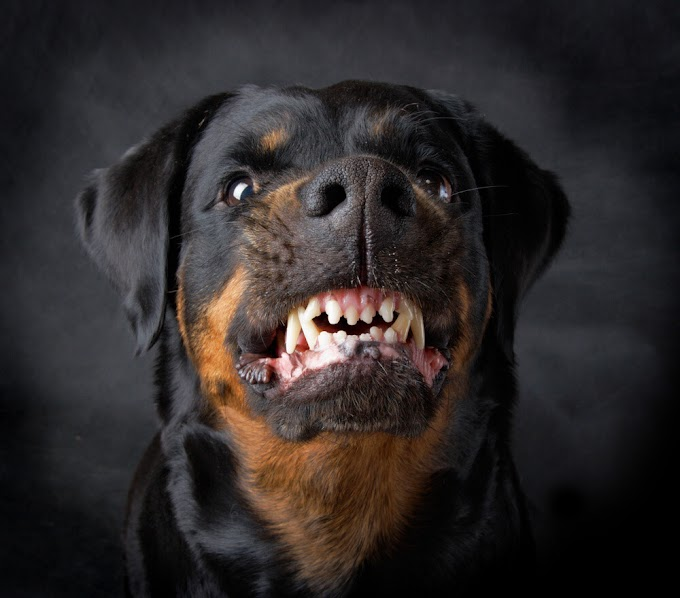 Sudden Aggression in Older Dogs - 10 Common Types and Solutions