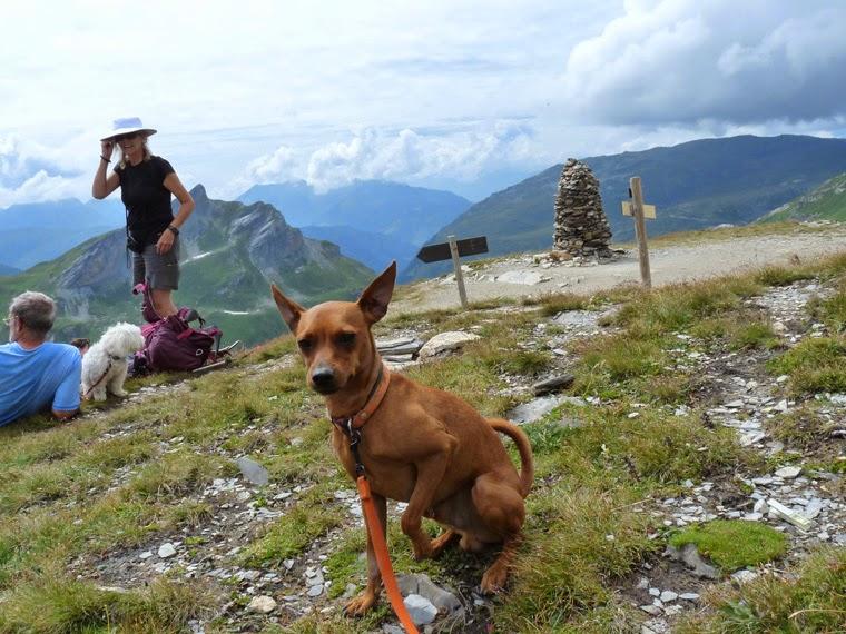 犬とテントでツール・ド・モンブラン Tour du Mont-Blanc avec mon chien