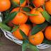 В Україну з Туреччини привезли заражені мандарини(видео)