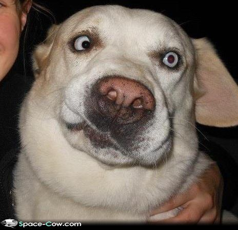 Funny Dog Faces With Quotes. QuotesGram  Funny Dog Faces...