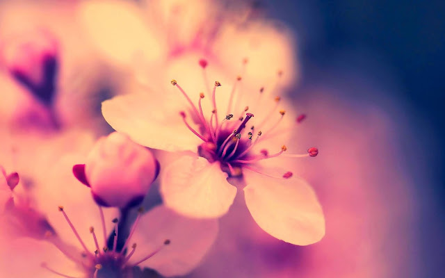 high-quality-Flower-wallpaper