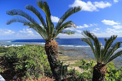 Cicas en la playa de la prefectura de Okinawa