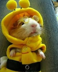 Miserable Hamster