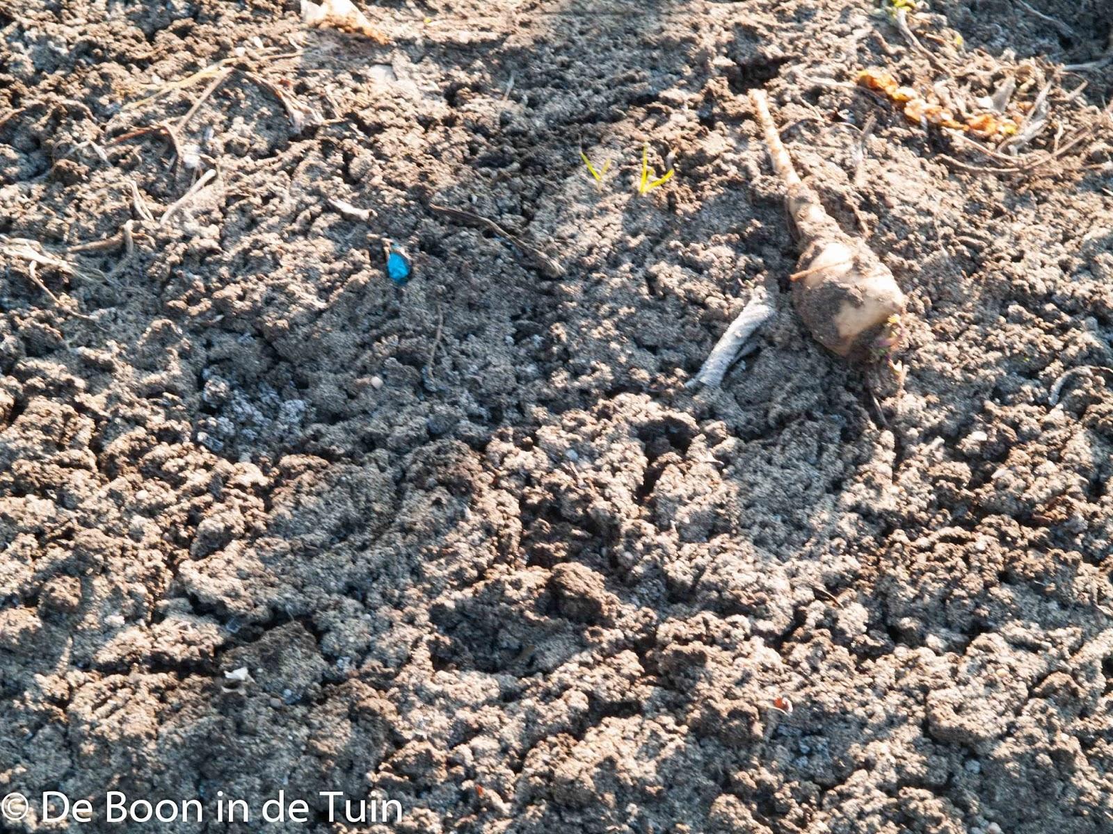verkruimelde grond door de vorst moestuin volkstuin