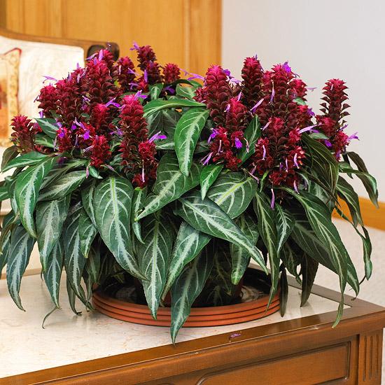 Cocoplex: 7 Amazingly Pretty Indoor Flowering Plants