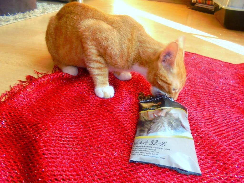 karma dla kotów leonardo składniki