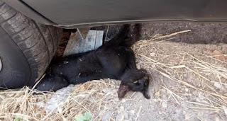 Πάτρα: Πάρκαρε το αυτοκίνητο του επάνω σε ένα ζωντανό γατάκι και ενοχλήθηκε που πήγε η πυροσβεστική να το απεγκλωβίσει (Photos)