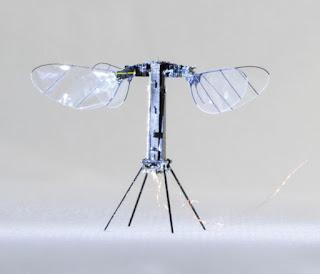 फ्लाइंग, कीट-जैसा रोबोट स्वतंत्र उड़ान के करीब पहुंचता है