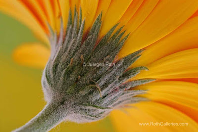 http://juergenroth.photoshelter.com/gallery/Abstract-Flower-Photography/G0000xwJgMChQG_s/