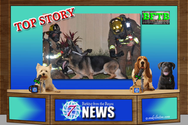 BFTB NETWoof News set with German Shepherd and firefighters on backscreen